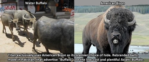 Buffalo vs American Bison